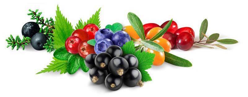 ARCTIC NUTRITION FINLAND - Organic Wild Food